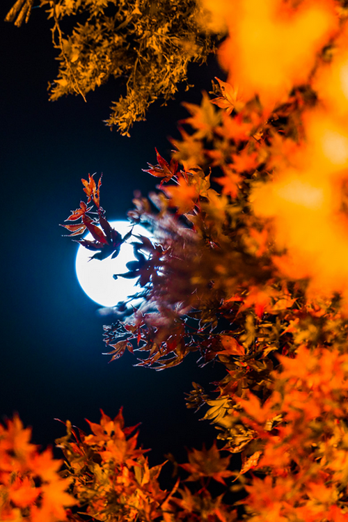 falling leaves moon