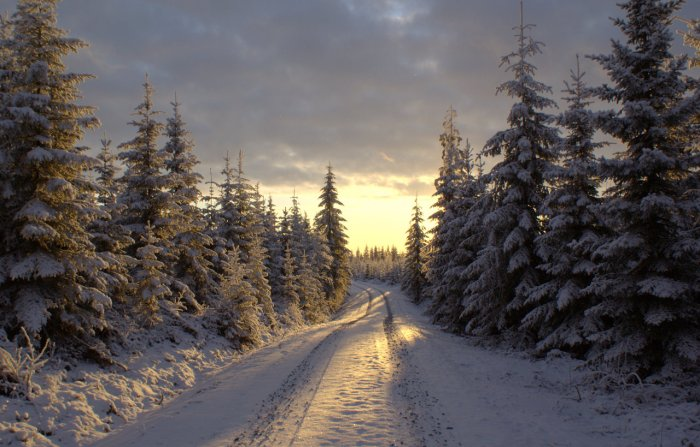 winter_road_by_lexious